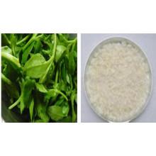 Andrographis Paniculata P. E / Andrographolid 98% HPLC / Andrographis Paniculata-Extrakt / Andrographolid