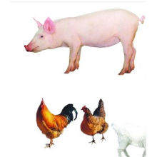 (enramycin) -Premix 8% Veterinary Drugs Enramycin