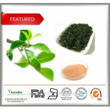 La mejor marca natural del extracto del té verde certificada con los aminoácidos de la cafeína de los polifenoles del té