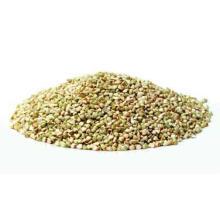 Venda quente 100% Natural Rhizoma Dibotryis Extrato