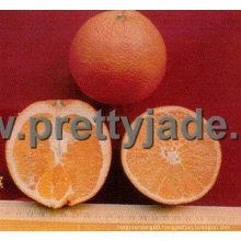 China Navel orange