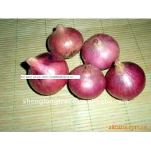 Chinesische neue rote Zwiebeln 3-5 cm