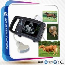 Échographe DW-S650 pour élevage porcin, échographie porcine