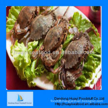 mud crab for sale supplier