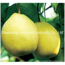 Новый урожай фруктов Fresh Ya Pear