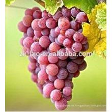 calidad alta calidad grado alimenticio Resveratrol piel roja Extracto de piel de uva en polvo