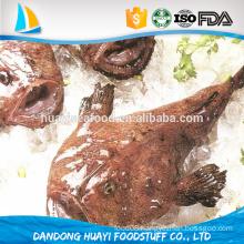 new arrival monkfish fish natural fresh whole monkfish