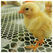 Malha de plástico de piso de frango