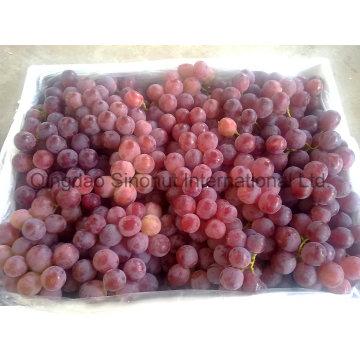 Свежий виноград с зеленым и красным