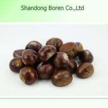 Alimentos saludables Chestnut crudo Chestnut fresco
