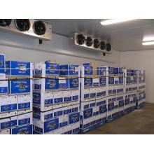 Hochwertiger Lebensmittel-Abstellraum, Cold Storage Room für Fleisch