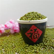 Nova safra chinesa Verde Mung Beans