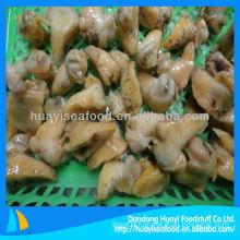 cooked frozen whelk meat(Buccinum Undatum)