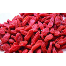 freeze dried goji berry
