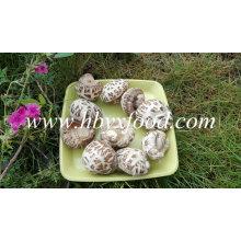 Champignons de fleurs blanches Shiitake séchées