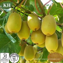 Factory Supply High Nutritious Kivi Fruit Extract Vitamin C