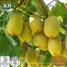 Fonte de Fábrica Alto Nutritious Kivi Fruit Extract Vitamina C