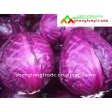 Red cabbage price packing in mesh bag