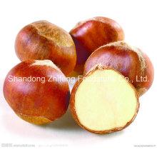 New Crop Chinese Organic Chestnut