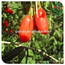 Ningxia échantillon gratuit certifié biologique goji berry