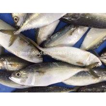 Bqf Новая посадочная рыба Индийская скумбрия