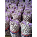 Beste Verkauf 2017 Neue Ernte Normal Weiß Knoblauch Reiner Weiß Knoblauch Shandong Knoblauch