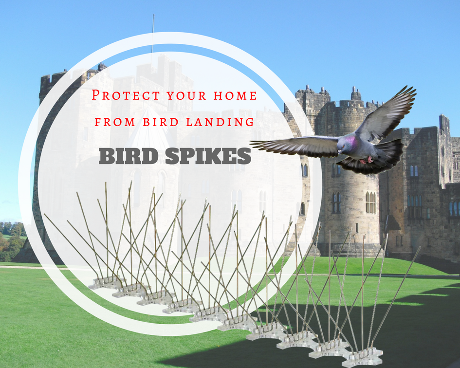 Bird Spikes for bird deterrent