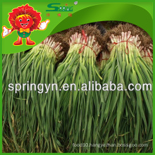 Chinese Long Garlic Leek Supplier