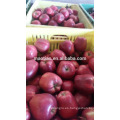 2016 Red Delicious Huaniu Apple