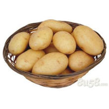 Wholesale bulk potato specifications potato starch specification
