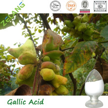 Natural Galla Chinensis Extract 99% Gallic Acid