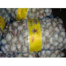 Buena calidad Exportar nuevo ajo chino de cultivo