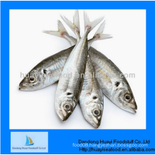 frozen good new better sardine fish with better quality