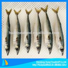 Hot Sale Mackerel Ice Fish de Chine