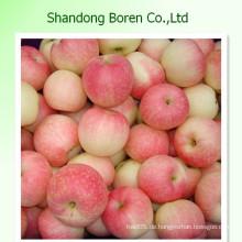 Gala Apfel Frische Frucht China Apple Export Hersteller