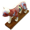Buy one 12004 Animal Cat, Half Acupuncture and Half Muscle Cat Anatomical Model