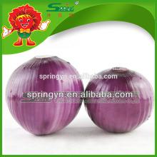 Cebollas rojas frescas chinas en bolso del acoplamiento