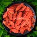 Berry Goji Berry rouge