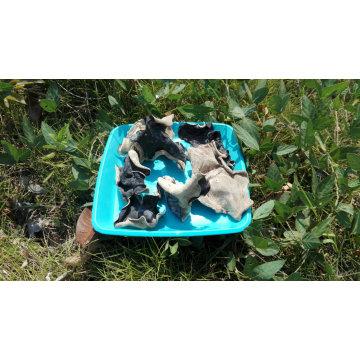 White Back Black Fungus Dried Black Fungus From China
