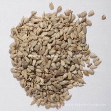Chinese Origin Sunflower Seed Kernel