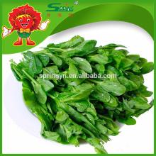Snow pea shoots 100% organic green vegetables