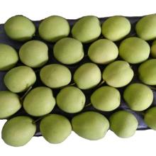 fresh pear fruit ya pear on sale shandong pear price