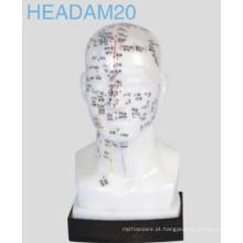 Modelo de cabeça de acupuntura (Headam20)