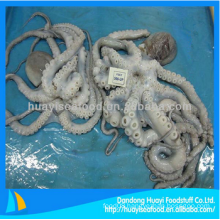 fresh frozen whiparm octopus with perfect price