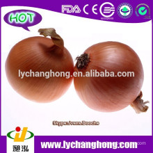 Fresh Red Onion Exporters in China