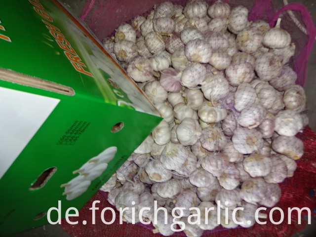 Best Price Normal Garlic