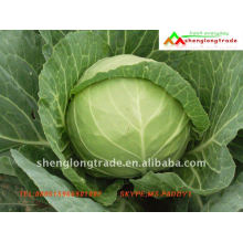 round small chinese raw cabbage for exporting