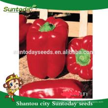 Suntoday Asian vegetable NON GMO F1 Organic up bell sweet pepper chilli seeds(21018)