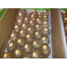 Fresh Kiwi Fruit for Sale