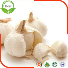 6.5cm up Normal Pure White Garlic From China